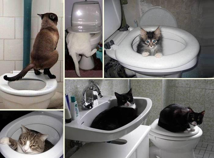 Как приучить кота к унитазу: практические советы и рекомендации