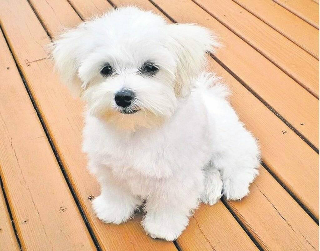Гипоаллергенные собаки - советы по выбору, рекомендации