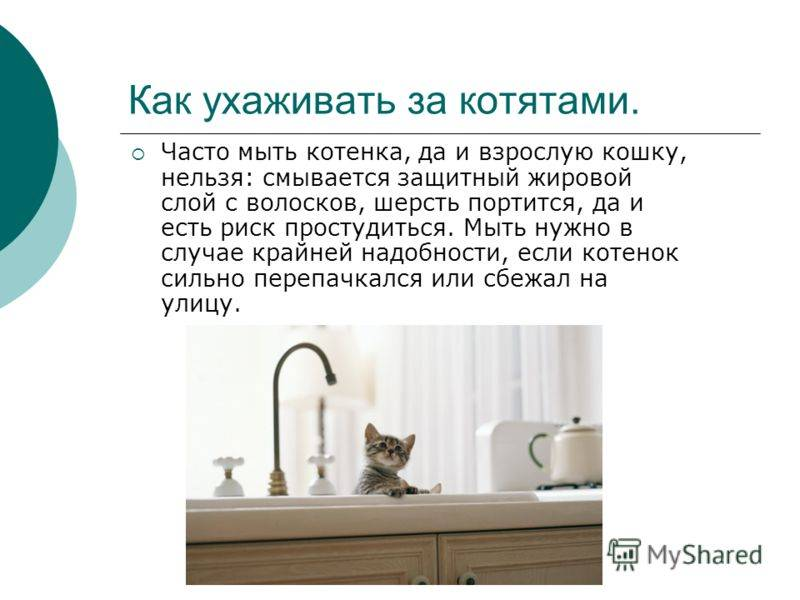 Уход за котами разных пород: питание, туалет, сон, стерилизация