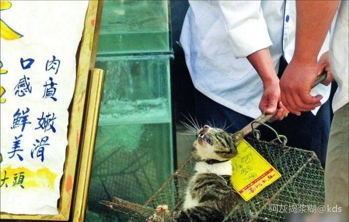 Почему кошка нюхает рот. зачем китайцы нюхают котов: чем опасно и как это правильно делать. как понять кошку — трение