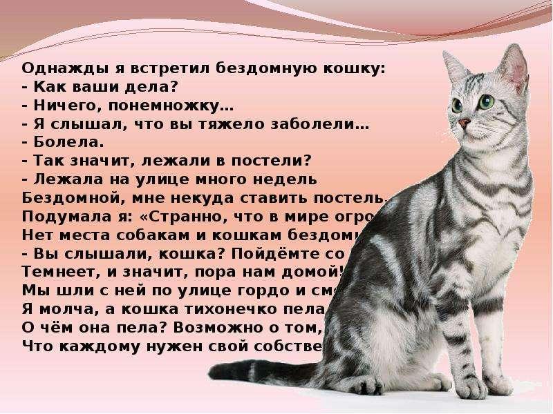 Спаривание кошек и котов: когда и как можно проводить вязку