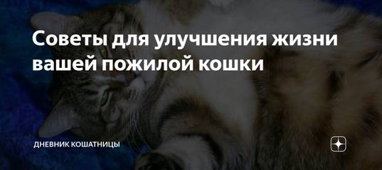 Как заставить пожилую кошку двигаться? | hill's pet