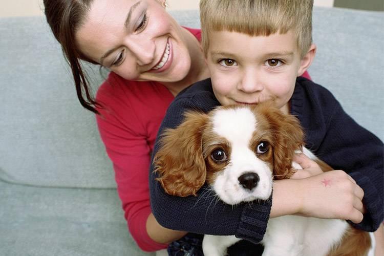 Лучшие породы собак для детей: выбираем идеального питомца