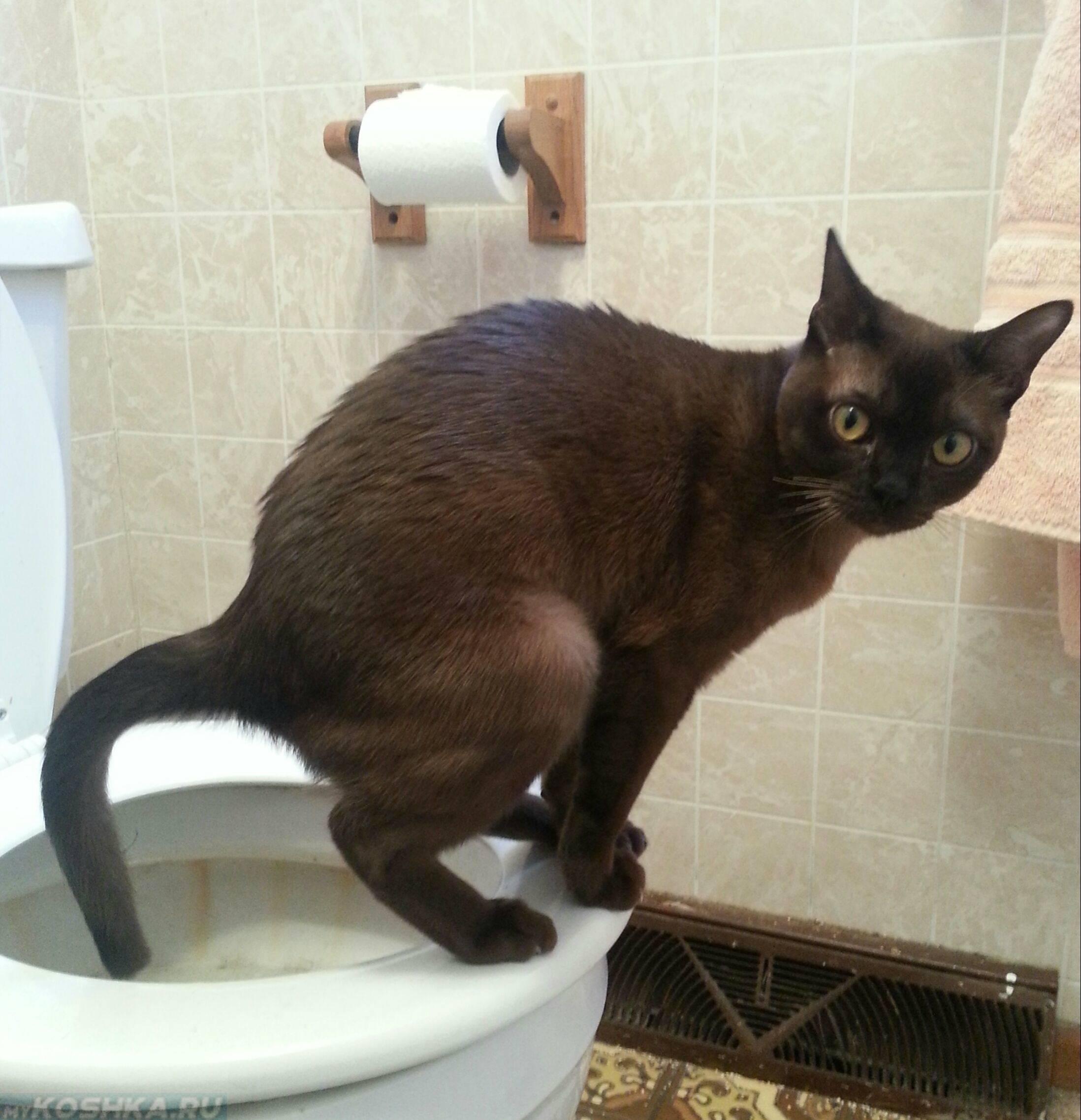 Кошка чешет попу об ковер: глисты, воспаление или раздражение?
