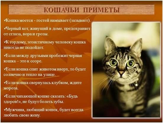 Что значит по приметам, если в дом пришла беременная кошка