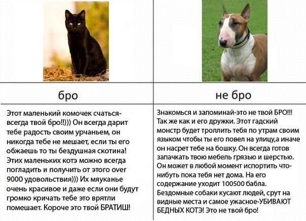 Кого лучше взять - кота или кошку: что учитывать перед тем, как выбрать питомца, лучшие породы для квартиры