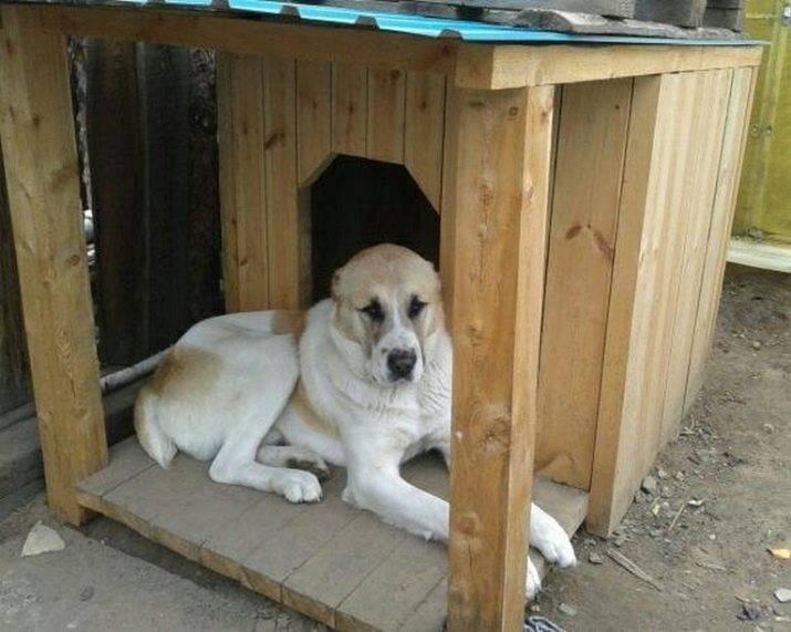 Вольер для собаки своими руками: размер, чертежи, этапы сборки