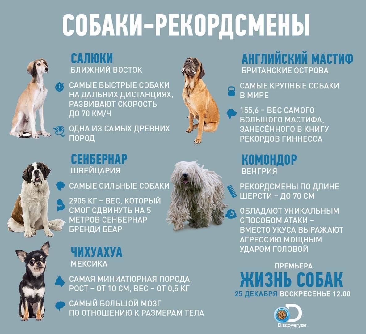 Продолжительность жизни животных: сколько лет живут собаки, кошки, птицы, насекомые и дикие животные | zoodom