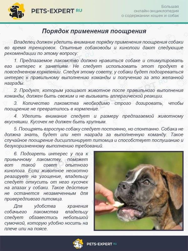 Собаки, дрессировка собак, методы и приемы, виды дрессировки, тренировка служебных и притравка охотничьих собак