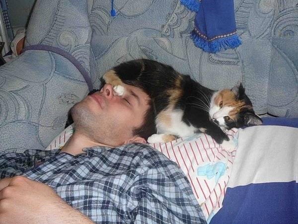 5 причин, почему кошка спит с человеком и о чем это говорит