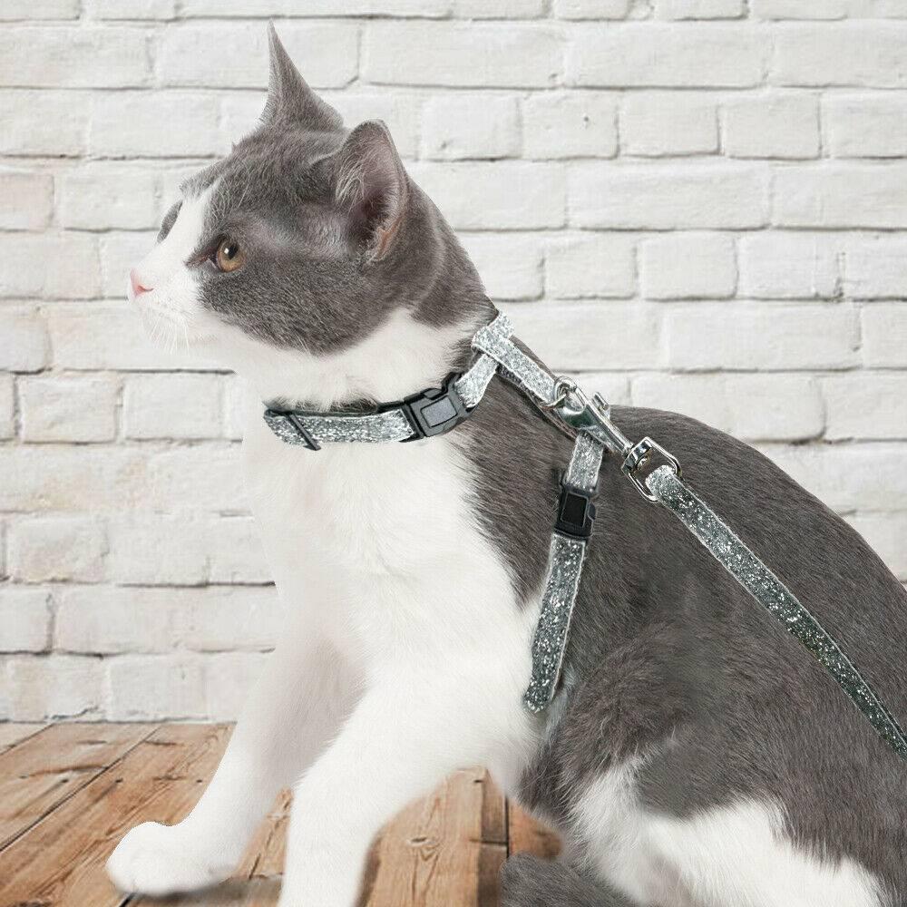 Как сделать красивую и удобную шлейку для кошки своими руками