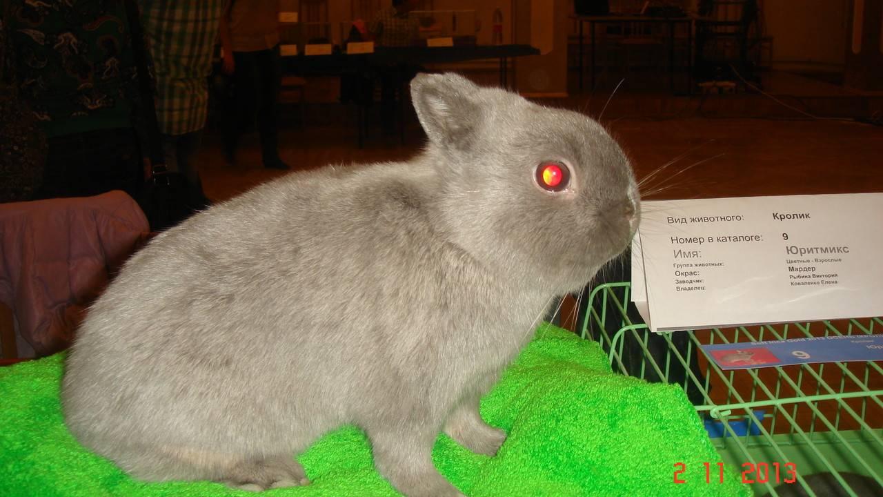Имена для кроликов: как назвать и приучить к кличке мальчиков и девочек