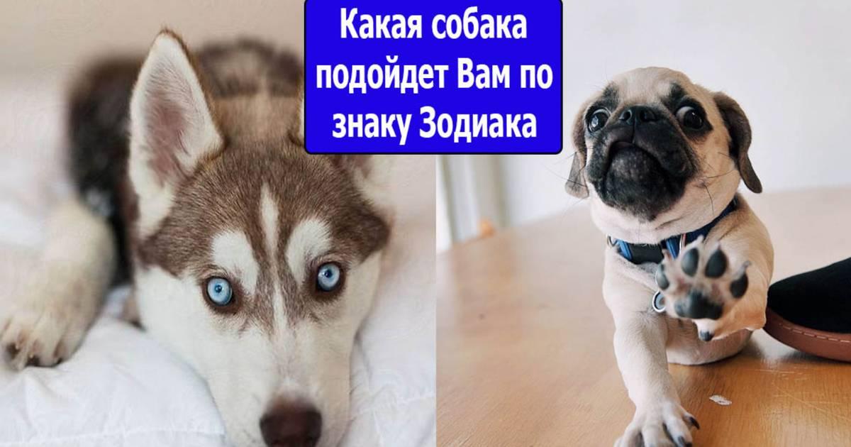 Породы собак, которые подходят вам по знаку зодиака