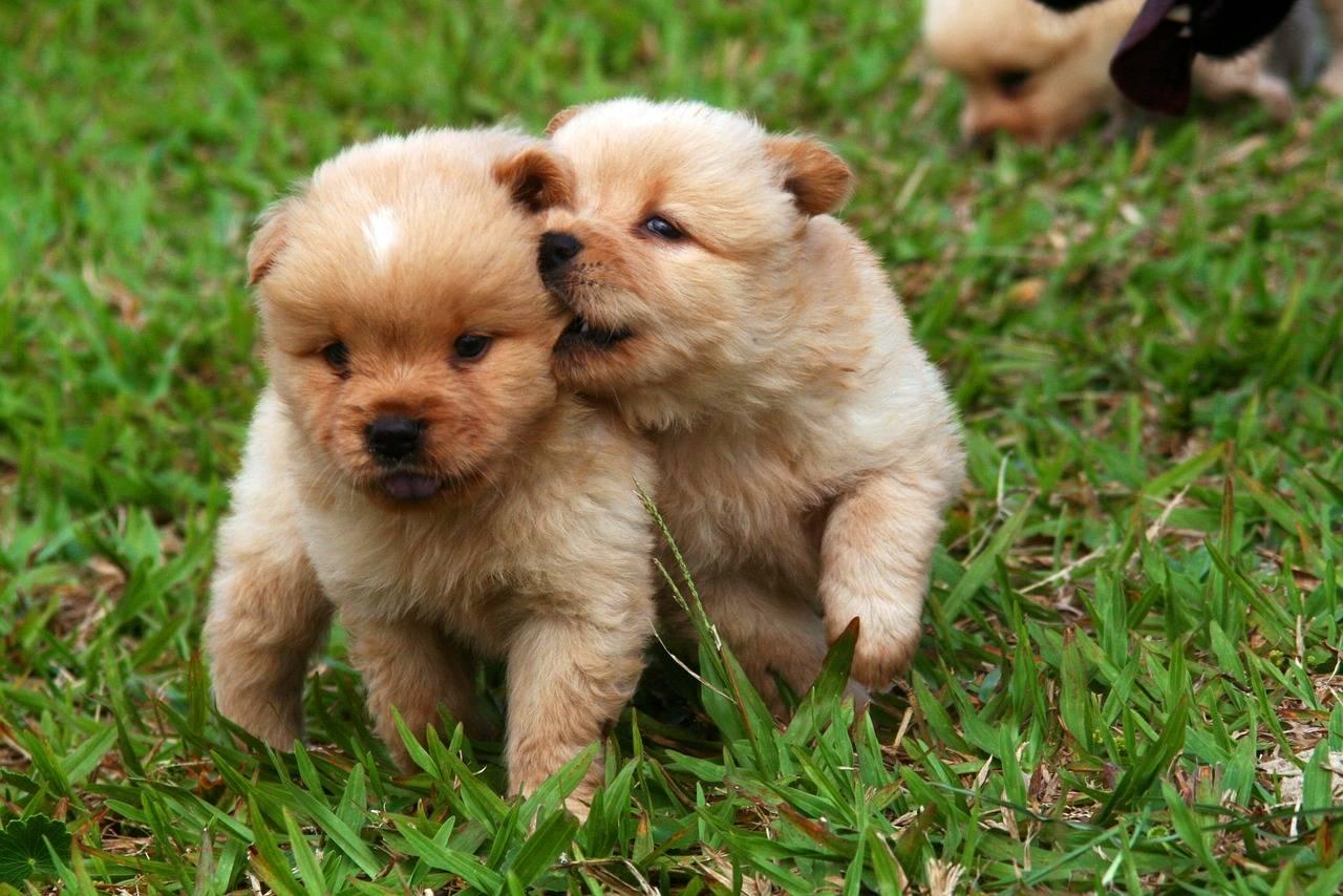 Клички для маленьких собак мальчиков