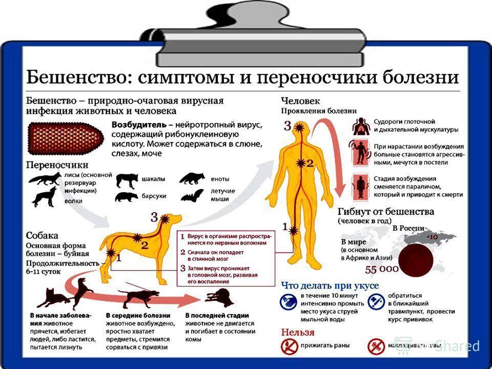 Гепатит у кошек:  причины, симптомы и лечение, заразен ли
