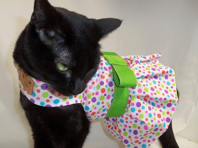 100 самых забавных одежек для котов: красивые костюмы у животных