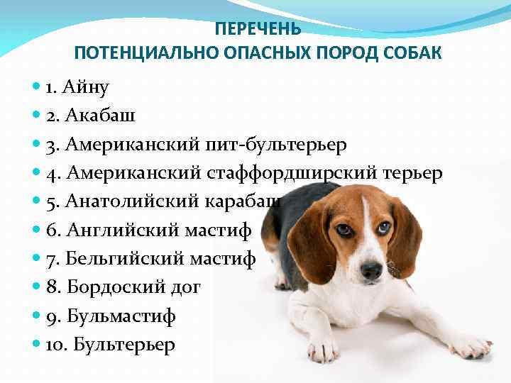 Постановление правительства - перечень опасных собак