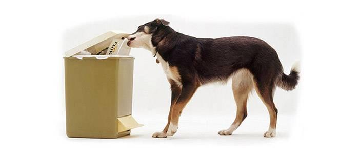 Как научить собаку команде «фу», обучение щенка команде «фу» пошагово