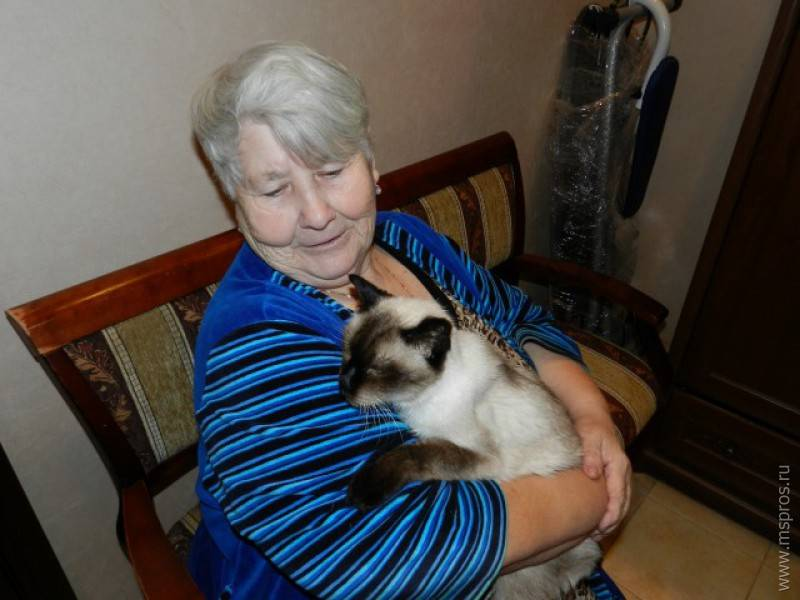 Коты-долгожители с описанием и фото: сколько лет самому старому коту в мире