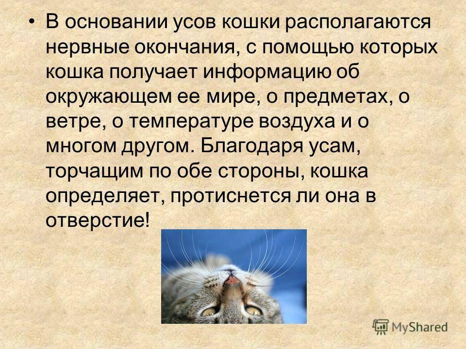 ᐉ зачем собаке усы? - ➡ motildazoo.ru