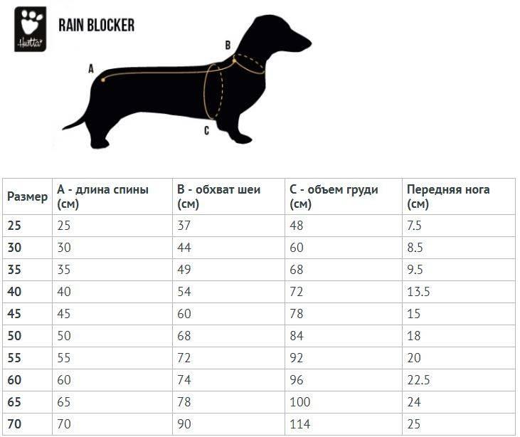 Описание породы собак жесткошерстная такса