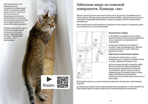 С чего начать разведение кошек и как стать заводчиком?