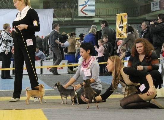 """Zooпортал.pro :: international dog show cacib – fci / интернациональная выставка собак cacib – fci """"кубок камы - 2021"""""""