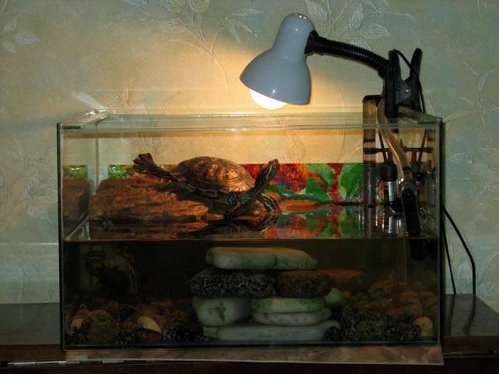 Ультрафиолетовая лампа для черепах (сухопутной и водной красноухой): вредны ли уф лампа террариума для рептилий человеку, освещение и обогрев для аквариума
