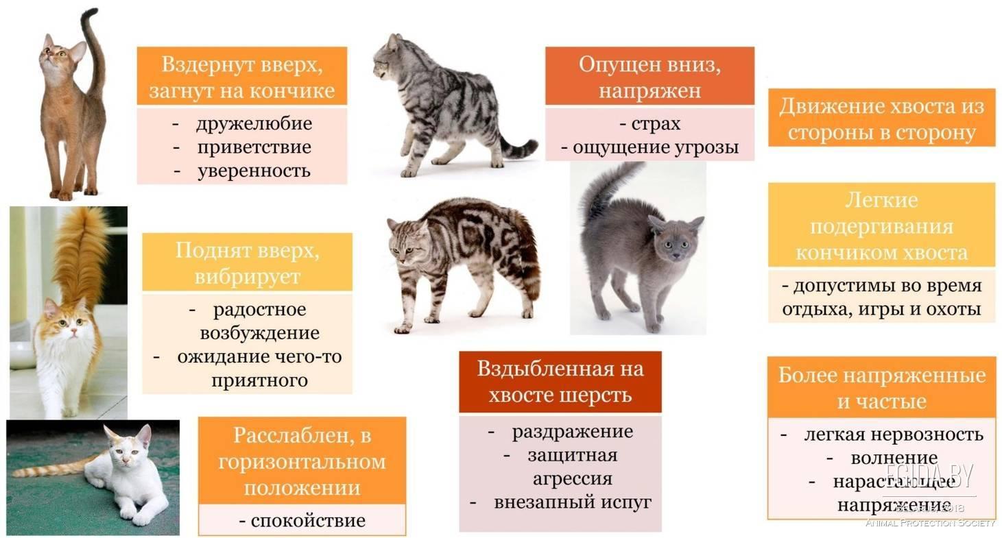 Как происходит вязка котов и кошек – что нужно знать новичку-заводчику