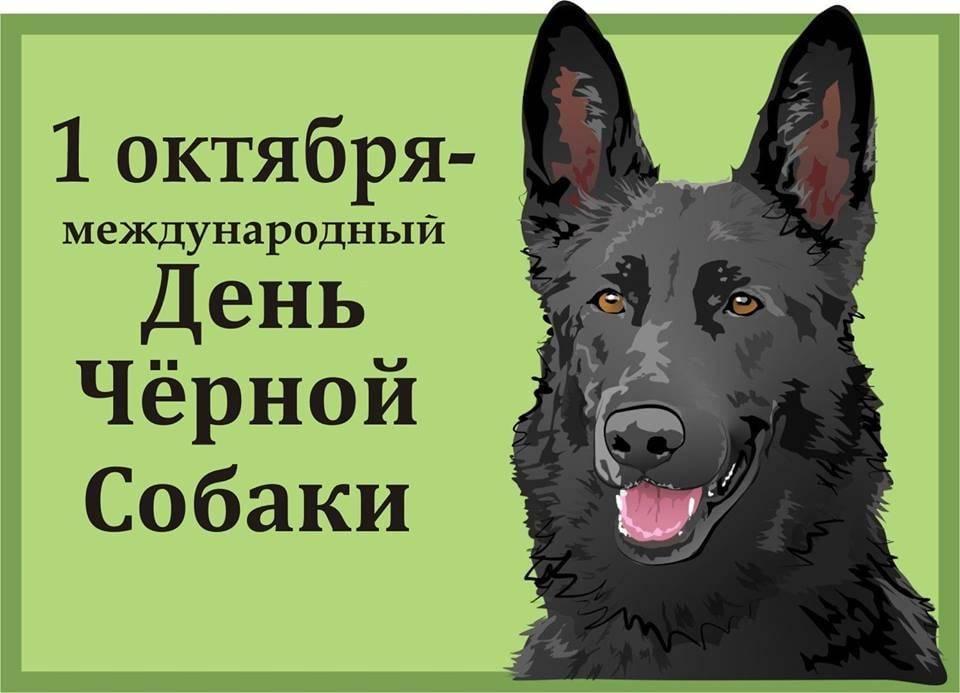 21 июня ‒ день кинолога в россии