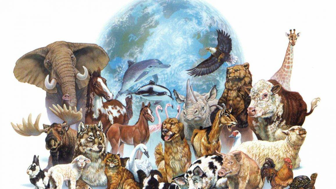 Каково значение животных в природе и жизни человека? 20 примеров, почему животные важны