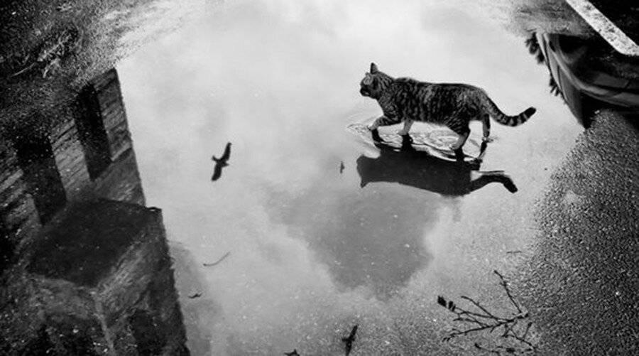 Смерть кошки в доме. толкование приметы, если животное умирает, не покидая жилище