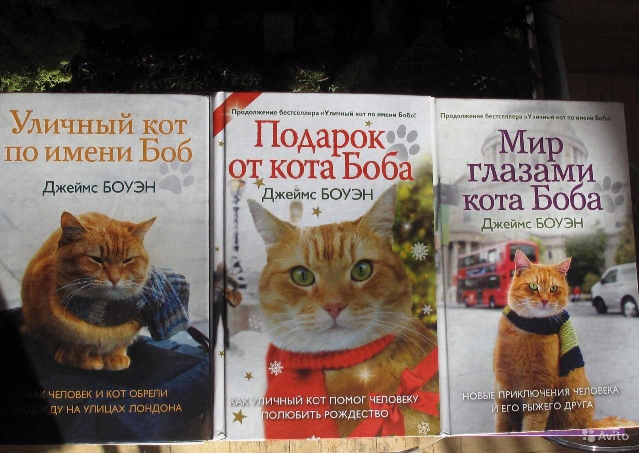Беспородная кошка: особенности характера и поведения, уход и содержание, отзывы владельцев