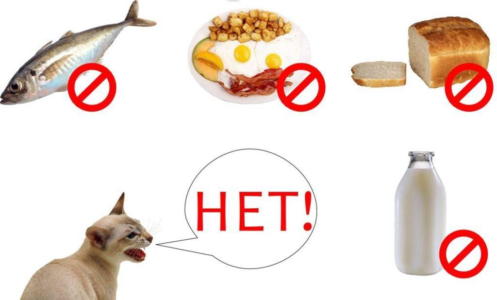 Продукты, опасные для собак и кошек