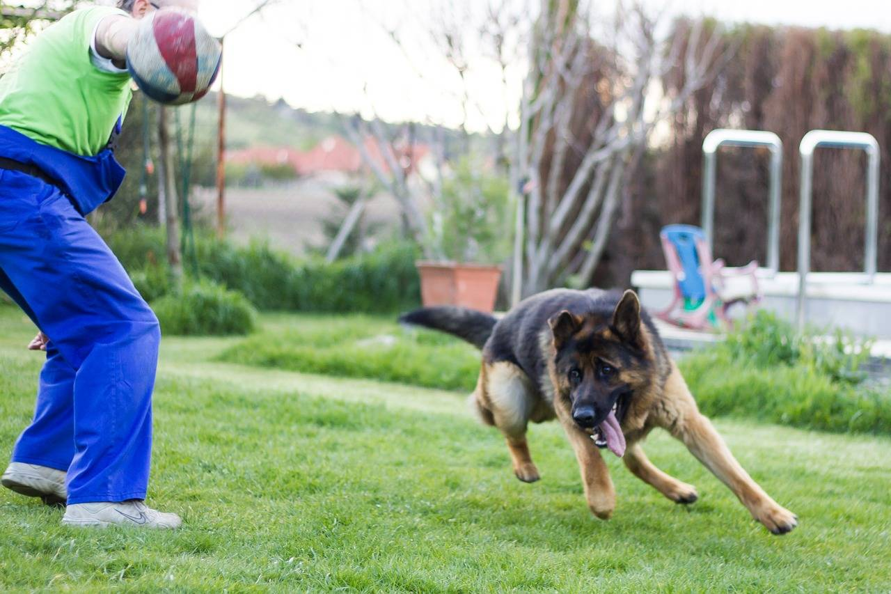 Как научить собаку командам: правила дрессировки, 13 полезных команд, курсы дрессировки с тренером