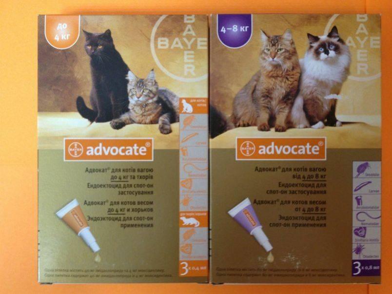 Адвокат для кошек до 4 кг упак 3 пипетки - купить, цена и аналоги, инструкция по применению, отзывы в интернет ветаптеке добропесик