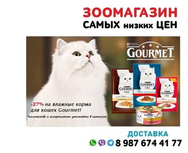 Корм для кошек гурме — только влажные консервы для взрослых животных - все о породах кошек с описанием, фотографиями и названиями.все о породах кошек с описанием, фотографиями и названиями.