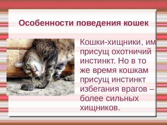 Домашние кошки: поведение, нюансы питания, сна и гигиены