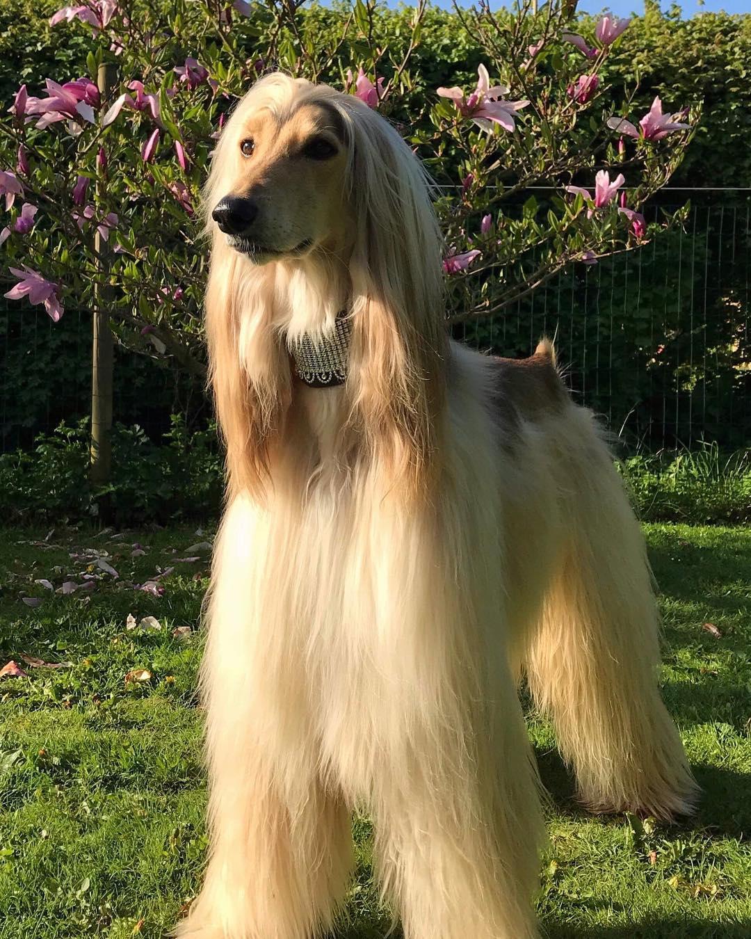 Самые красивые породы собак в мире