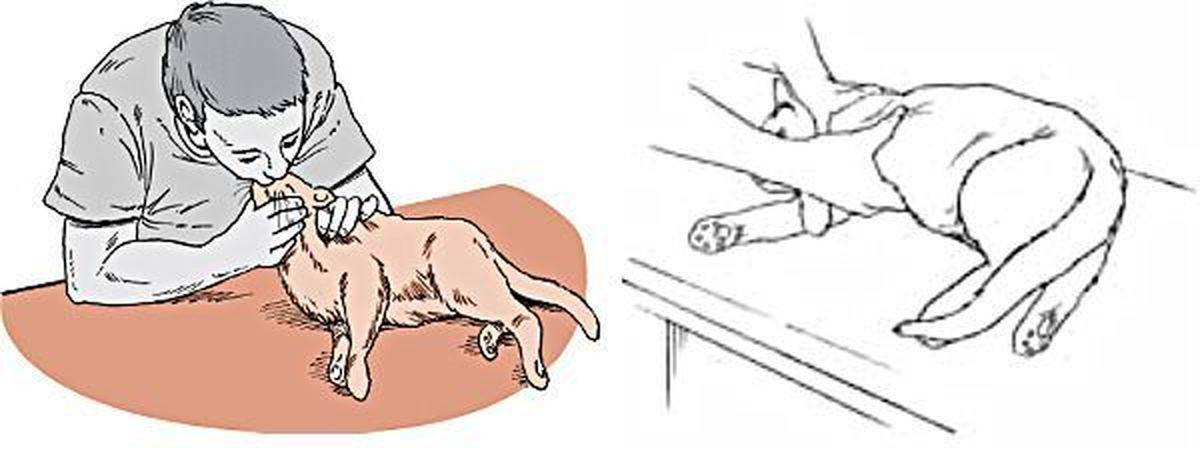 Фурункул и карбункул: причины, симптомы, как лечить - напоправку – напоправку