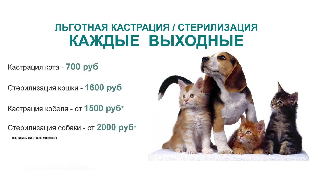 Кастрация собак: зачем нужна, как происходит, отзывы
