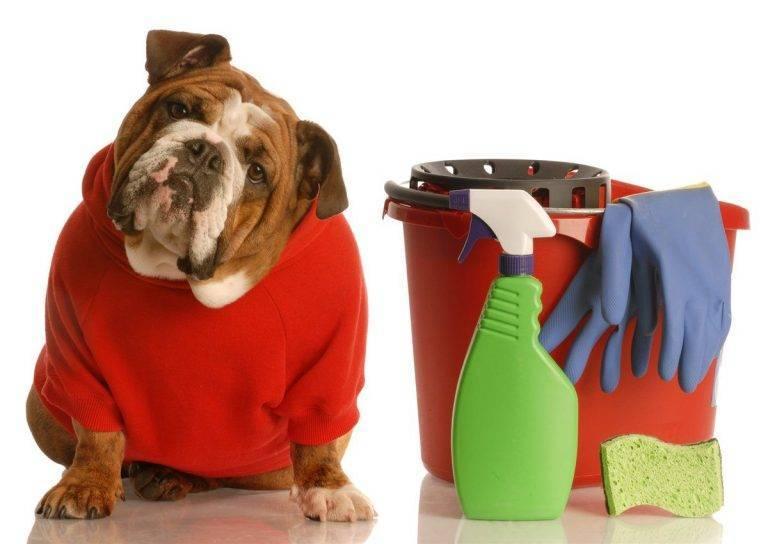 От собаки с любовью: убрать запах от собачьего туалета