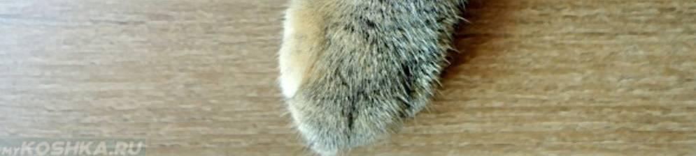 Почему кошки хромают на задние лапы если не видно каких-то повреждений