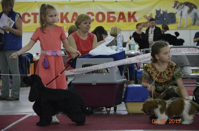 """International dog show cacib – fci / интернациональная выставка собак cacib – fci """"кубок камы - 2021"""""""