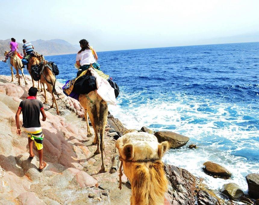 Всё о путешествиях с животными: как поехать, где остановиться и какие есть ограничения — блог onetwotrip