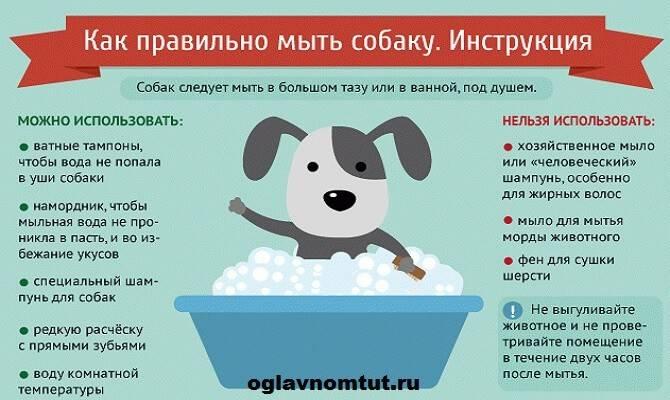 Берете собаку? что нужно купить для щенка: список. список что нужно для щенка в квартире