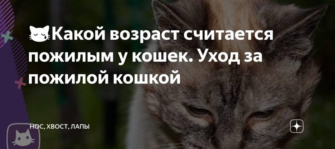 Как ухаживать за престарелыми кошками?