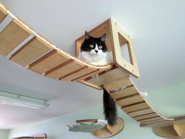 8 лайфхаков, облегчающих жизнь владельцам кошек