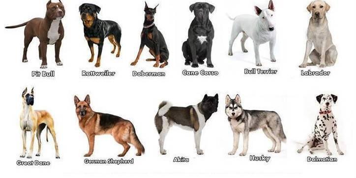 Какая собака мне подходит по гороскопу: тест