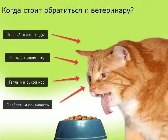 Сколько дней кошка может прожить без еды и воды, не есть и не пить, когда болеет?